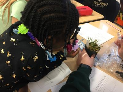 Photograph of a third grader using a magnifying glass to look at a sundew plant